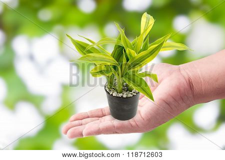 Man Hand Holding With Green Plants In The Small Pots On Green Bokeh Background
