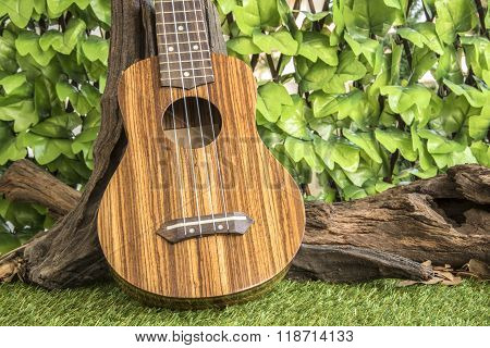 Ukulele On Garden Background