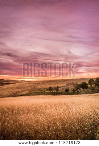 Purple Tuscan Sunset