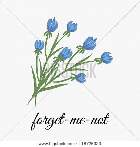 Flower forget me not