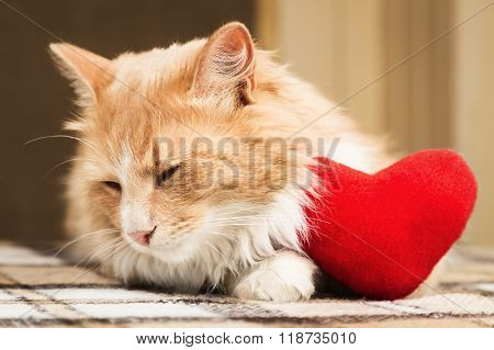 Golden red cat turned away