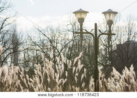 Public Lamp, Dry Grass And Bare Trees. Horizontal Winter View With Part Of Building With Bare Trees,