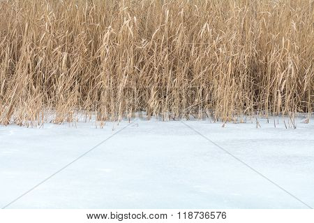 Frozen Dry Grass Texture In Snow. Winter Background With Brown Dry Grass And White Snow..