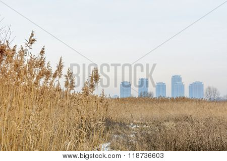 Meadow Dry Grass With Blocks And White Sky. Winter Background With Tall Dry Grass, Buildings On The