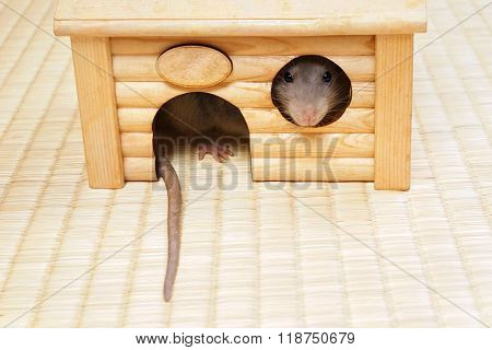 House with a decorative rat frontal view.