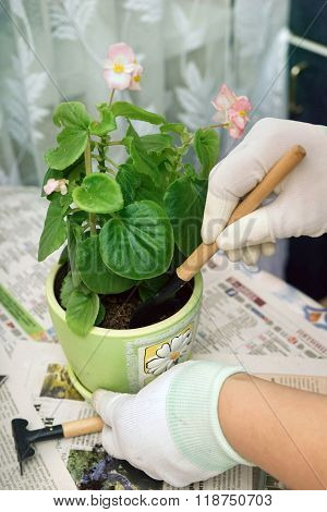 Cultivation the ground in a pot with homemade flower.