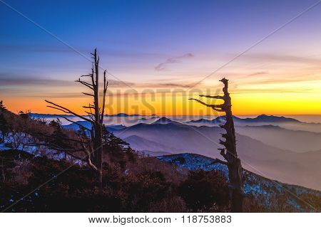 Silhouette Of Dead Trees, Beautiful Landscape At Sunset On Deogyusan National Park In Winter,south K