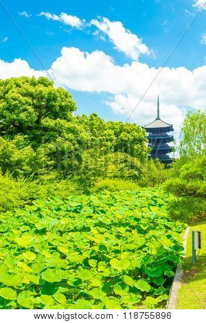 Toji Five Story Pagoda Tower Lilypad Garden Far
