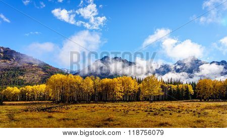 Fall Colours in the Rocky Mountains in Banff National Park