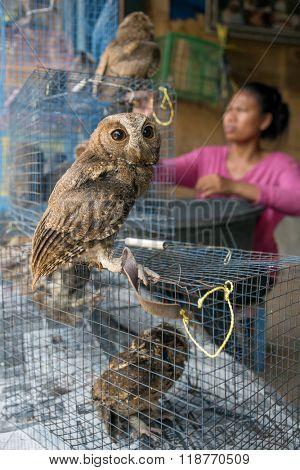 Yogyakarta, Indonesia - April 5, 2015: Owl for sale in Pasar Ngasem Bird Market in Yogyakrta, Indonesia