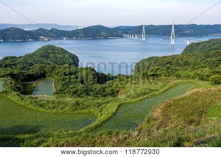 Paddy field and bridge