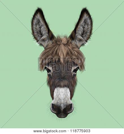 Farm Donkey Portrait