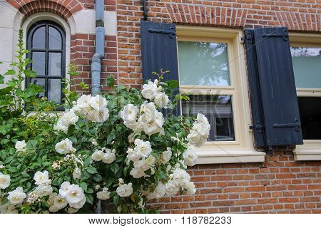 Twine White Roses On The Facade Of Brick House
