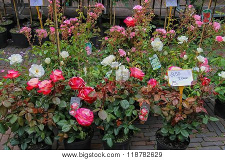 Street Flower Shop With Colourful Rose Bouquets In Haarlem, The Netherlands
