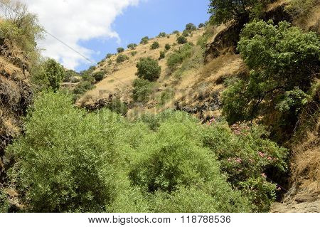 Golan Heights Landscape.