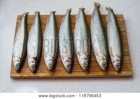 smelt fishes on white background