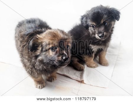 Two Puppies Dogs