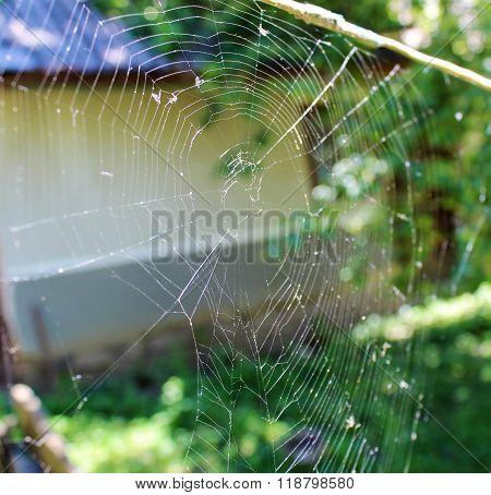 Bright Spider Web