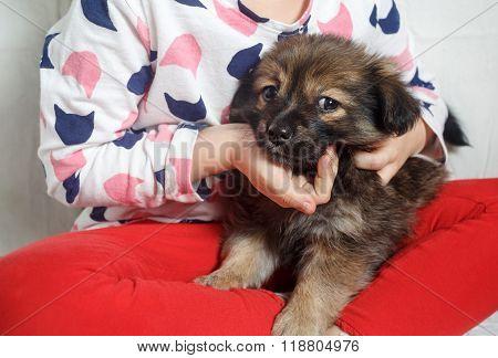 Puppy in childrens hands