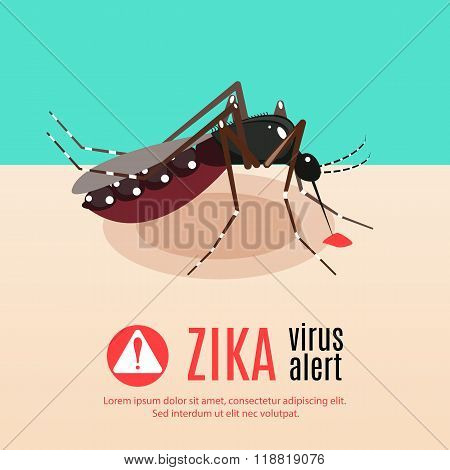 Zika virus alert illustration with Aedes Aegypti mosquitoes  stings, bites and drinks blood
