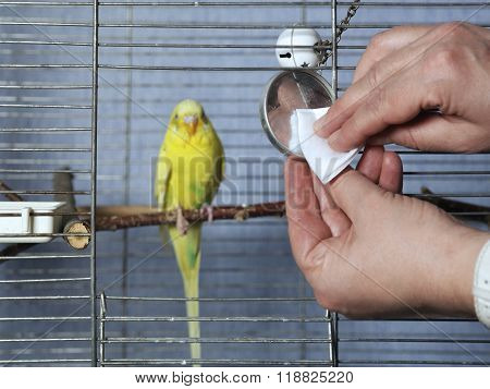 Cleaning Bird Cage