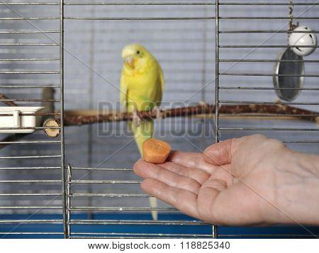 Feeding A Parrot