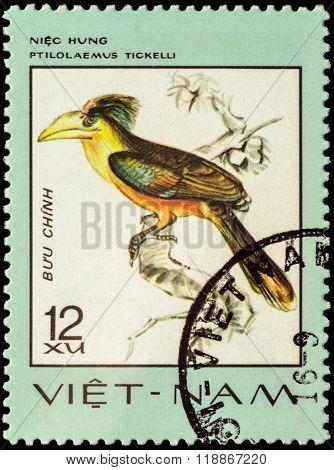 Bird Anorrhinus Tickelli On Postage Stamp