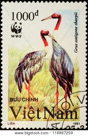 Sarus Crane (grus Antigone Sharpii) On Postage Stamp