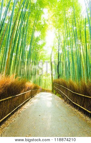 Bamboo Tree Forest Sun Light Beams Empty Road