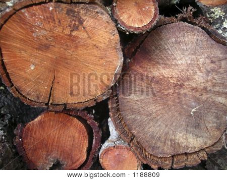 Firewood Trunks