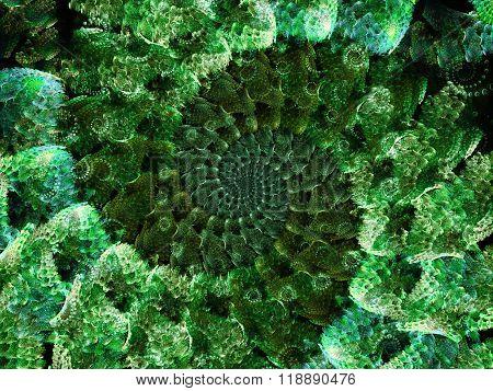 Spiral Petals