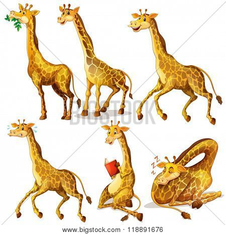 Giraffes in six positions illustration