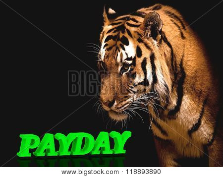 Payday  Bright Green Volume Letter, Animall Pussy Tiger