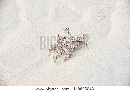 Cotton covered thorn on travertines, textured background at Pamukkale reserve