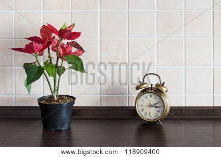 Kitchen Worktop Background. Plant With Clock