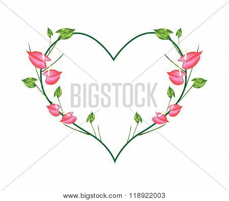 Red Anthurium Flowers In A Heart Shape