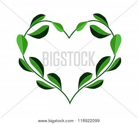 Fresh Evergreen Leaves In A Heart Shape