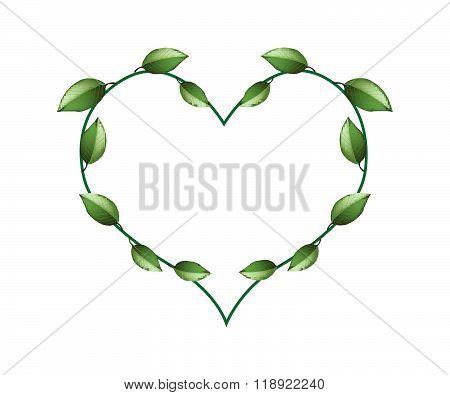 Fresh Green Vine Leaves In A Beautiful Heart Shape