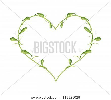 Beautiful Green Mistletoe In A Heart Shape