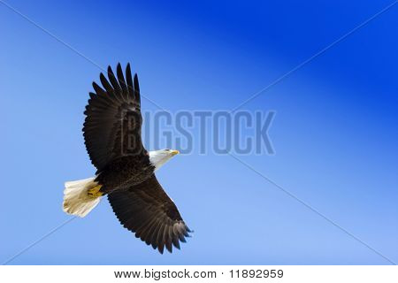 American eagle on blue sky