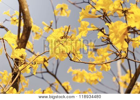 Blooming Yellow Trumpet Flower In Vintage Style