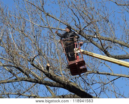 Pruning Trees Using A Lift-arm