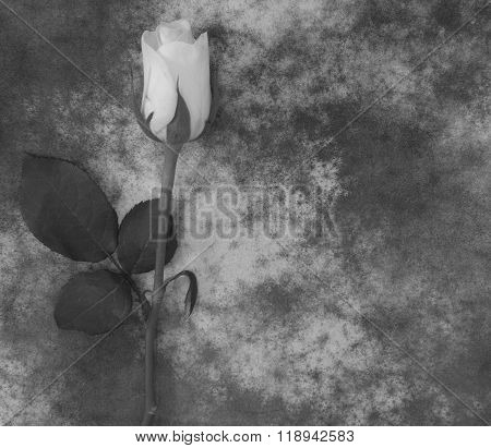 Condolence Card - Rose