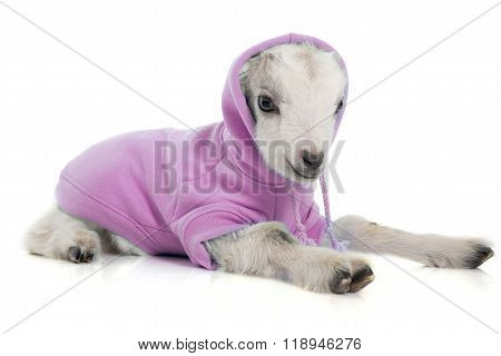 Dressed Young Goat