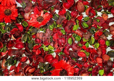 Dried Red Daisies Flowers With Leaves Background