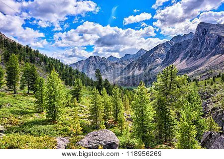 Siberian Mountain Rare Woods