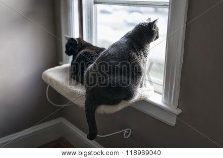 White And Black Cat Sitting On Window Ledge