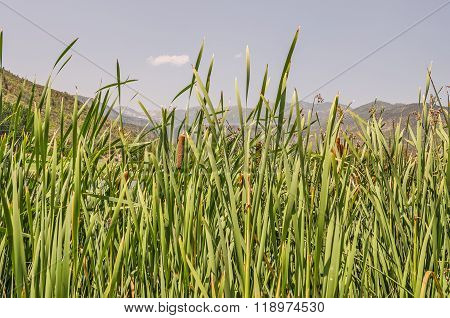 Mountains Through The Cattails