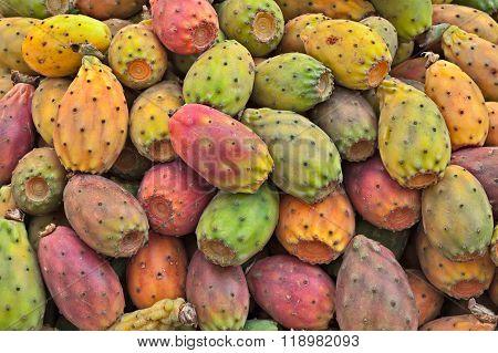Indian Fig