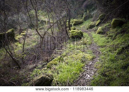 mountain path and stones with moss